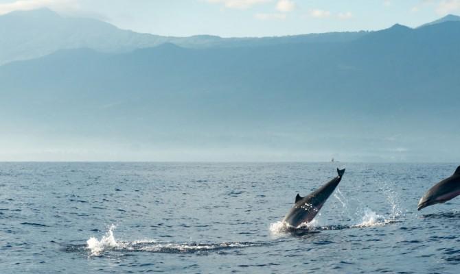 dolfijnen-spotten-bali