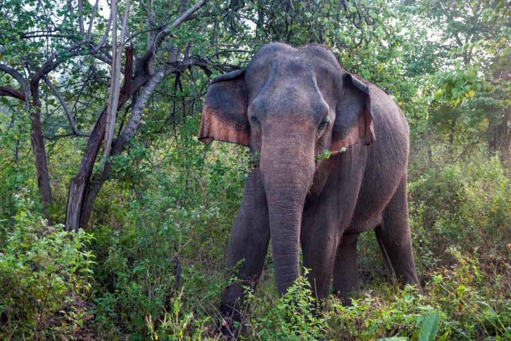 Udawalawe National Park 3
