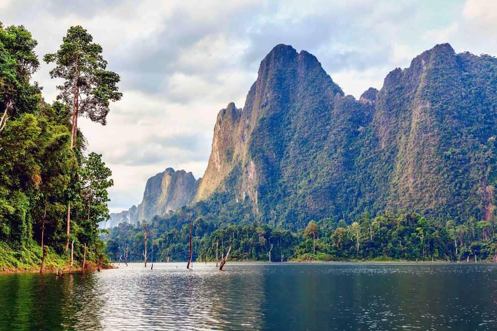 blog dholes khao national park thailand