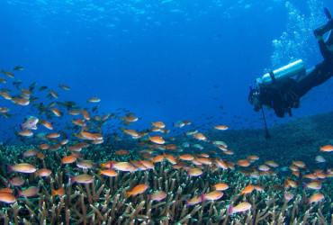 duikenbali-header
