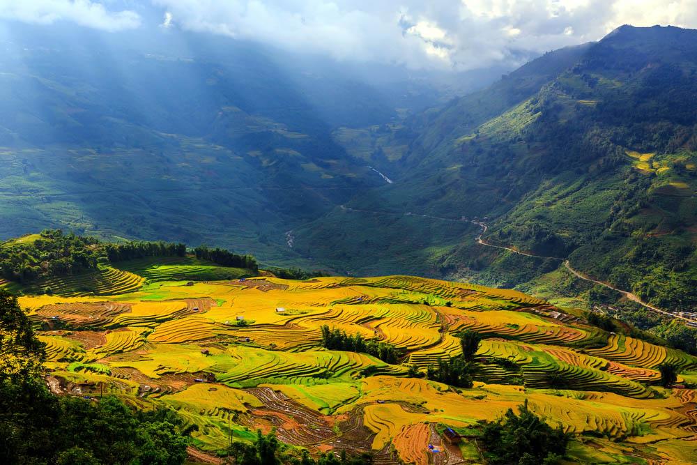rijstvelden azië
