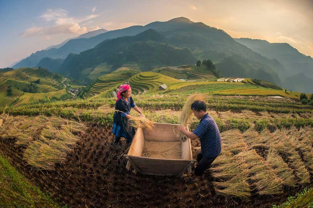 Mu Cang Chai 5