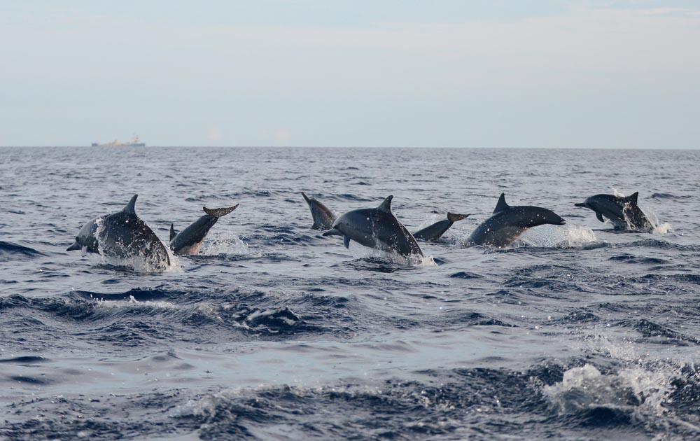 Dolfijn 3