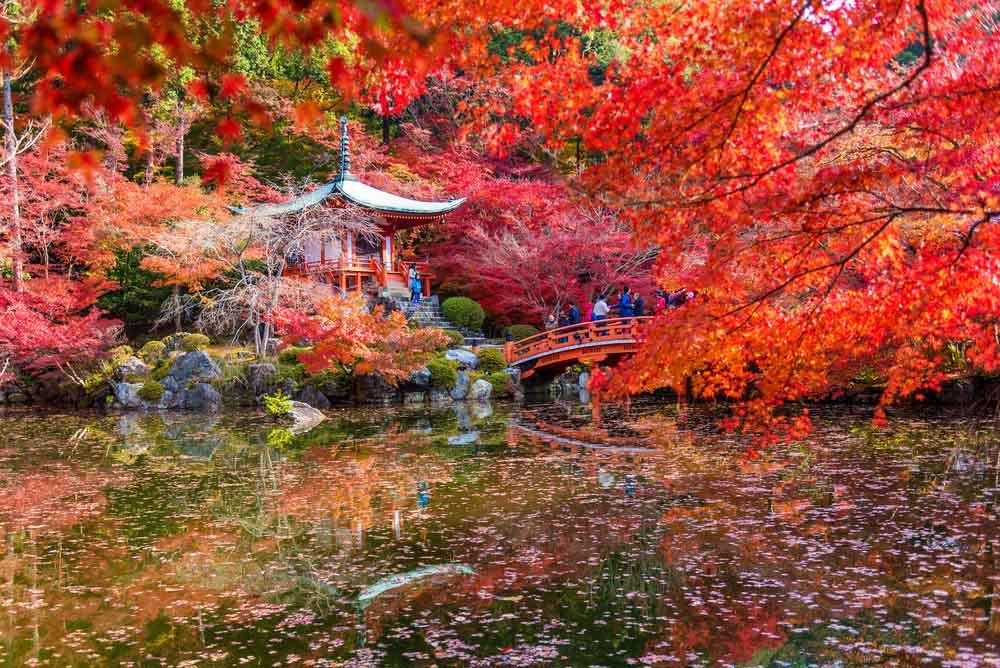 Local Kyoto 3